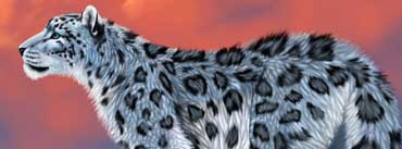 Snow Leopard Drawing Cover Photo