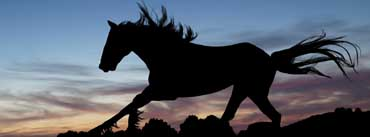 Horse At Night Cover Photo