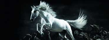 Horse And Wolves Cover Photo