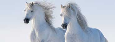 Two White Horses Cover Photo