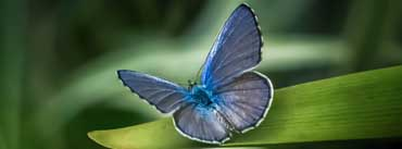 Butterfly On Leaf Cover Photo