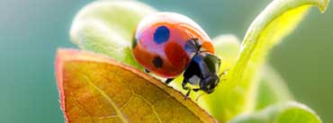 Ladybug On Leaf Cover Photo