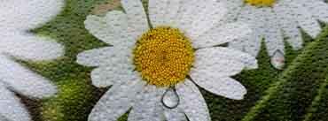 Ubuntu Daisy Flower Cover Photo