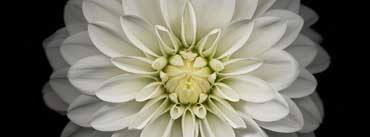 Apple Ios Flower White Cover Photo