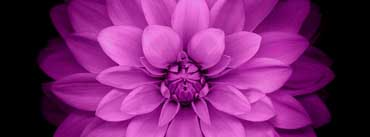 Apple Ios Flower Purple Cover Photo