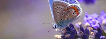 Butterfly On Purple Flowers Cover Photo