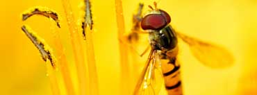 Hoverflies Cover Photo