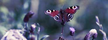 Butterfly With Open Wings Cover Photo