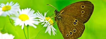 Butterfly With Daisy Cover Photo