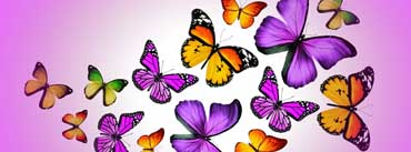Butterflies Vector Cover Photo