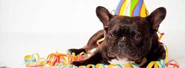 Happy Birthday Dog Cover Photo