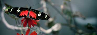Black Butterfly Cover Photo