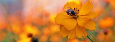 Bee Sitting On A Orange Flower Cover Photo