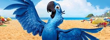 Rio Bird Movie Cover Photo