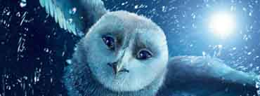 Legend Of The Guardians The Owls Of Ga Hoole Cover Photo