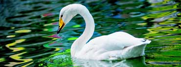 Swan Green Lake Cover Photo