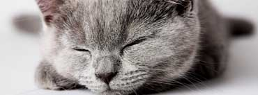 Sleepy Grey Kitten Cover Photo