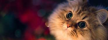 Cute Kitten Cover Photo