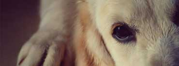 Sadness Dog Cover Photo