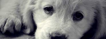 Sad Eyes Dog Cover Photo