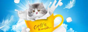 Adorable Kitten Coffee Milk Cover Photo