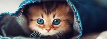 Cat Hiding Cover Photo