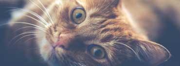 Kitten Face Cover Photo