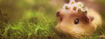 Cute Guinea Pig Cover Photo