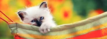 Cute Kitty Cover Photo