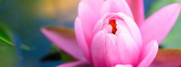 Cute Pink Water Lily Cover Photo