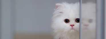 Cute White Cat Cover Photo