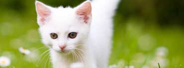 Cute White Kitten Cover Photo