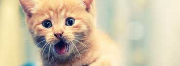 Kitty Surprises Cover Photo