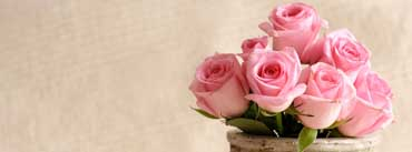 Light Pink Roses Cover Photo