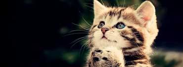Prayer Cat Cover Photo