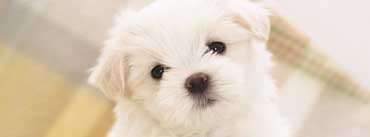White Fluffy Puppy Cover Photo