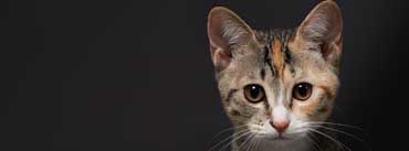 Cute Kitten Face Cover Photo