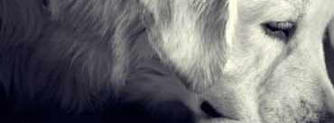 Black And White Dog Cover Photo