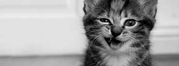 Funny Kitten Cover Photo