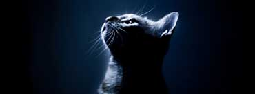Kitten In The Dark Cover Photo