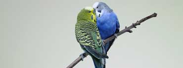Parrots Kiss On Branch Cover Photo