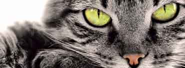 Green Eyes Gray Cat Cover Photo