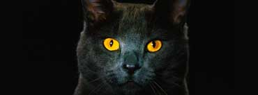 Golden Eyes Black Cat Cover Photo