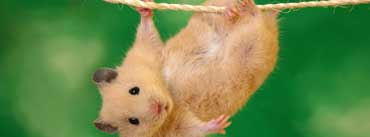 Funny Hamster Cover Photo