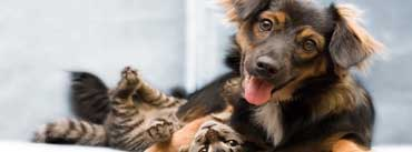 Dog And Cat Friendship Cover Photo