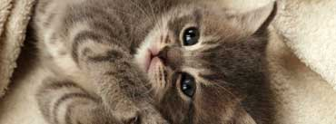 Cutest Kitten Cover Photo