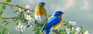 Flowers And Love Birds Cover Photo