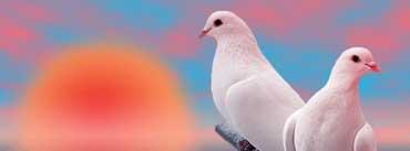 Beautiful White Love Birds Cover Photo