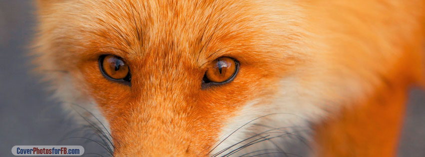 Red Fox Face Cover Photo
