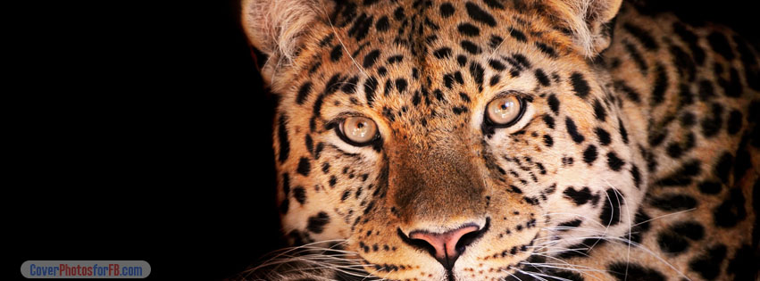 Magnificent Leopard Cover Photo